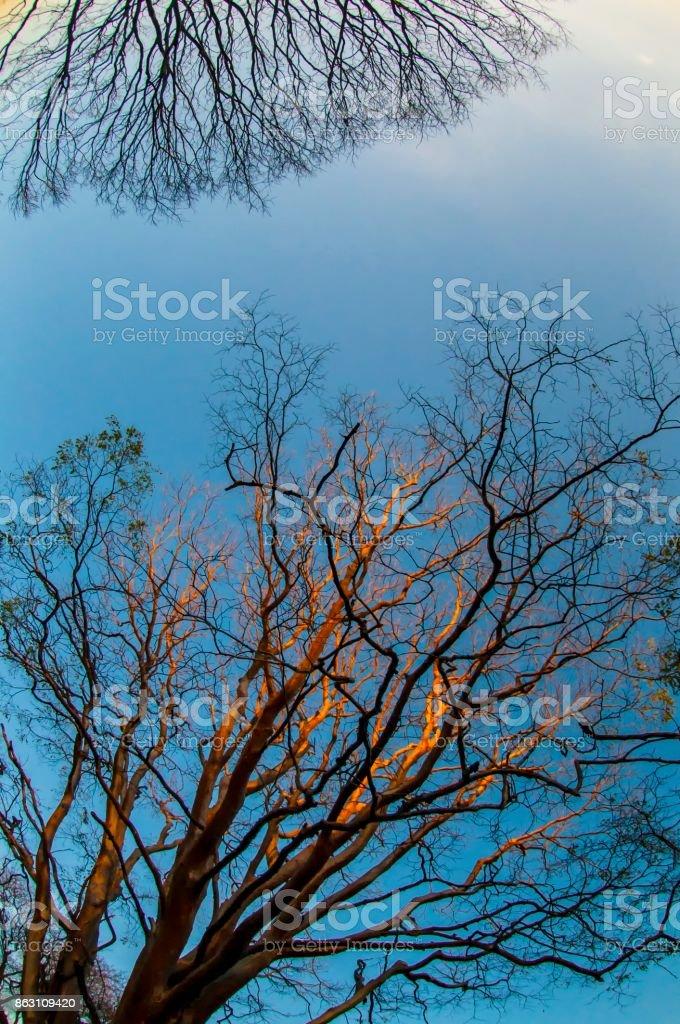 Cerrado trees stock photo