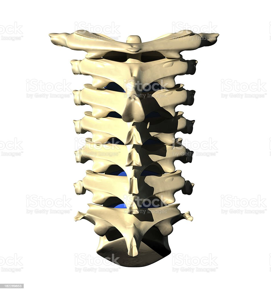 Cervical Spine - Posterior Back view royalty-free stock photo