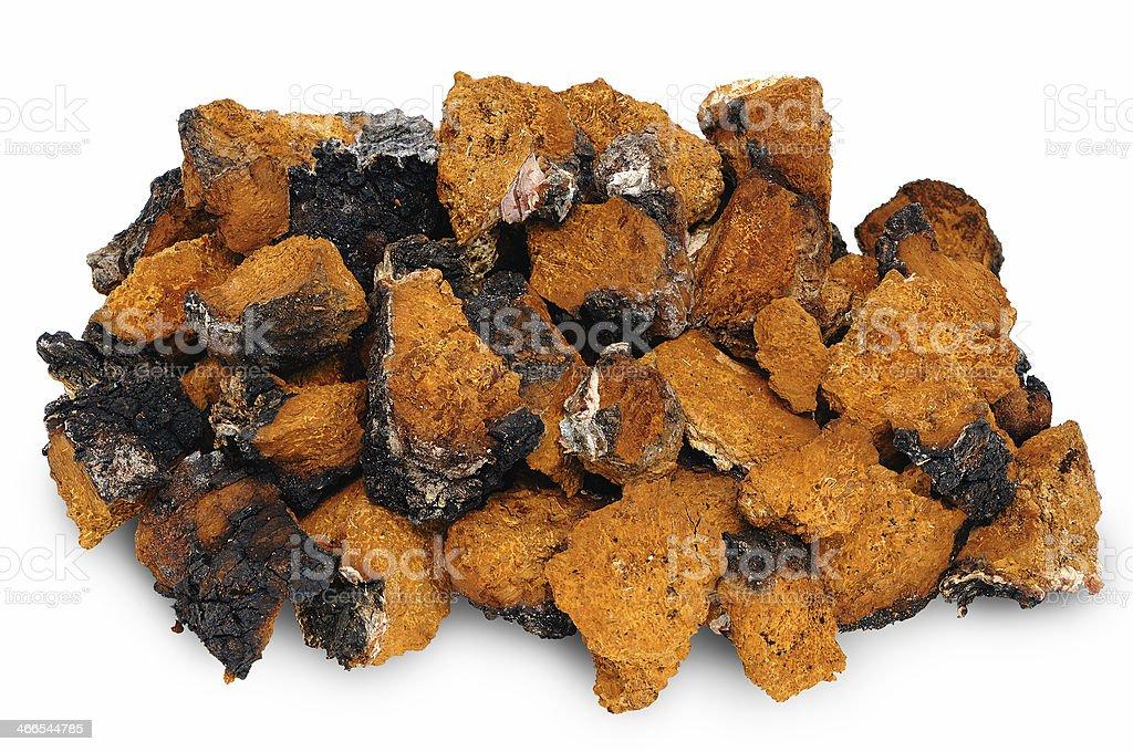 Chaga - birch mushroom royalty-free stock photo