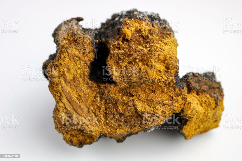 Chaga Mushroom stock photo