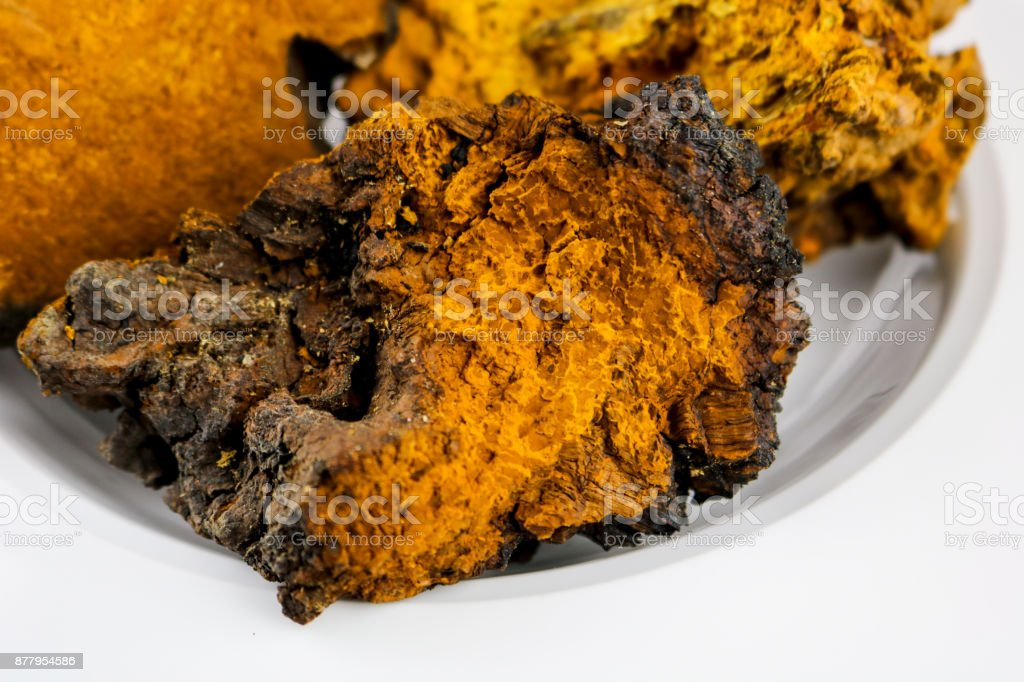 Chaga Mushrooms stock photo