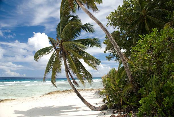 Plage de Chagos - Photo
