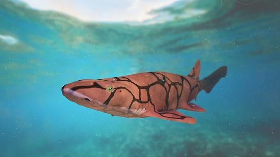 Chain Catshark Small Shark Species In The Atlantic Ocean ...