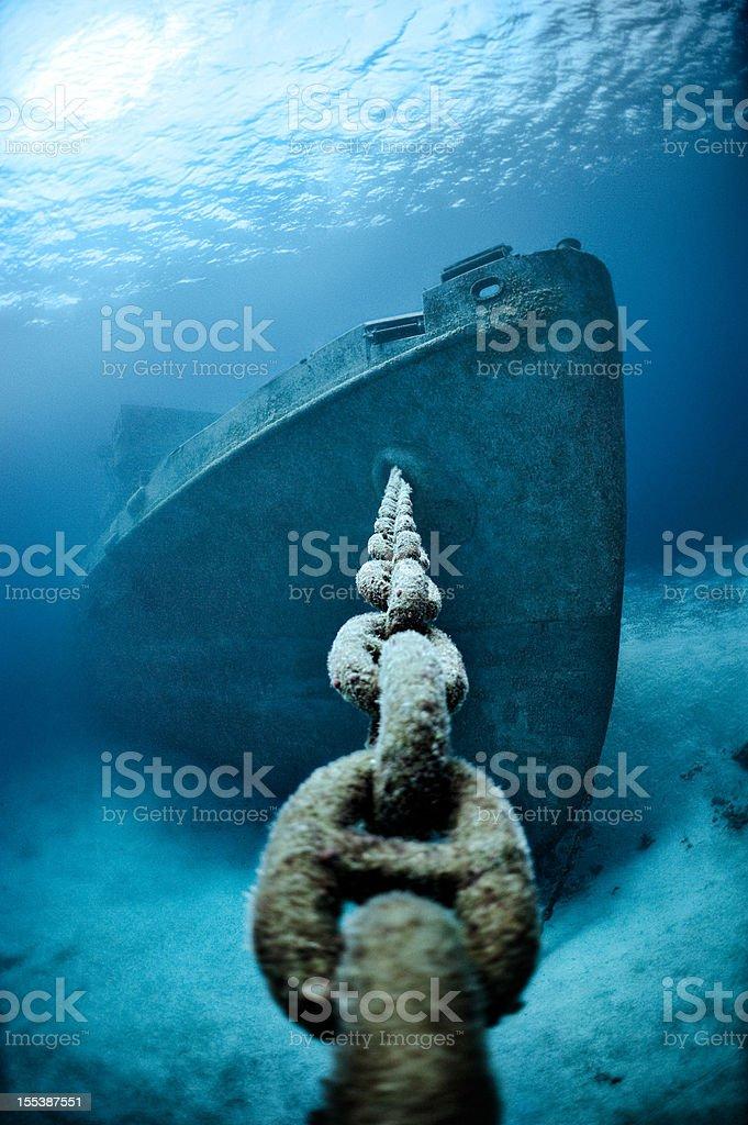 Cadeia de andorinha-do-mar - foto de acervo