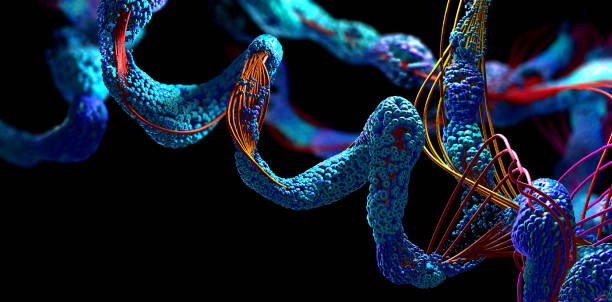 Chain of amino acid or bio molecules called protein - 3d illustration stock photo