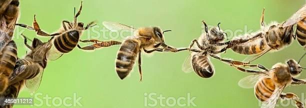 Chain of bees picture id489811212?b=1&k=6&m=489811212&s=612x612&h=fdnk6hny x7xrjhvvllpxpsw34zo6kiar0 n42mfcci=