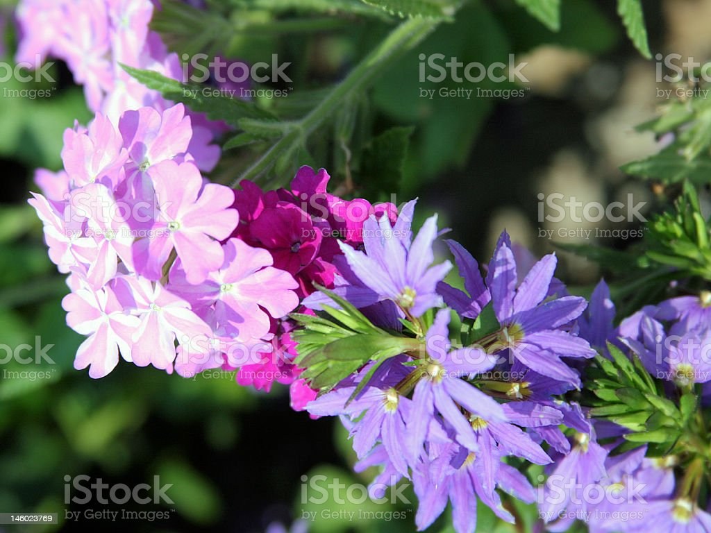 Chain of Flowers stock photo