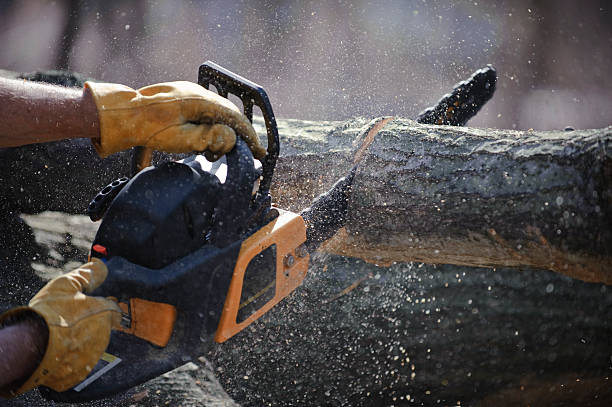 chain saw cuts a fallen tree - chainsaw stock photos and pictures