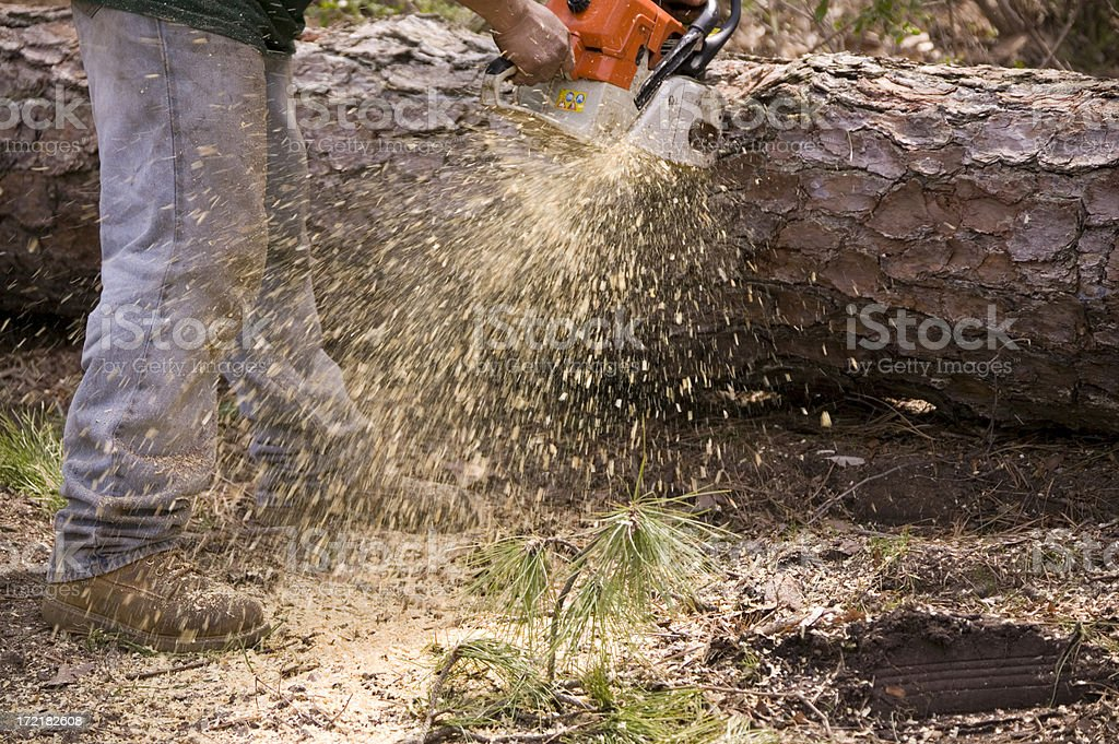 Chain Saw vs. Tree #3 royalty-free stock photo