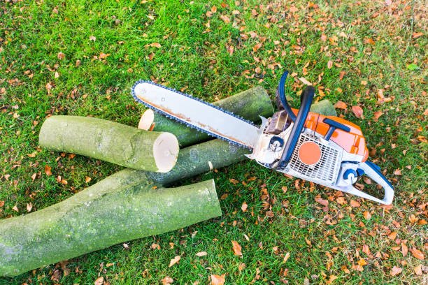 Chain saw with tree trunk or branch stock photo