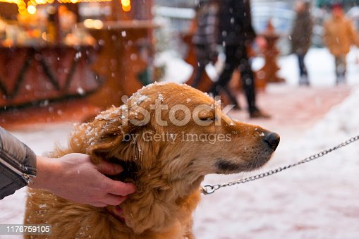 Chained and freezing dog at a Christmas market is cuddled