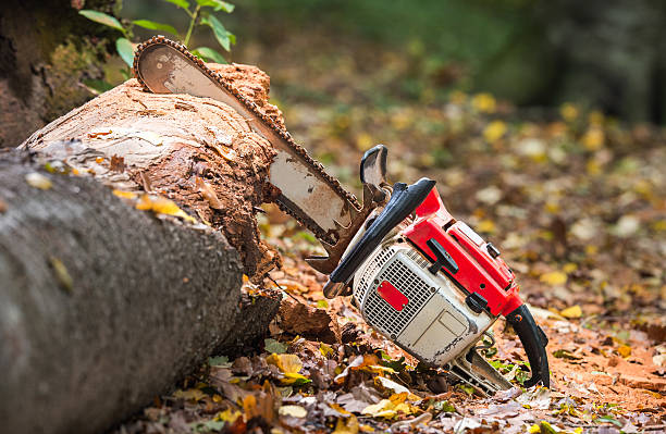 chainsaw and tree trunks - chainsaw stock photos and pictures