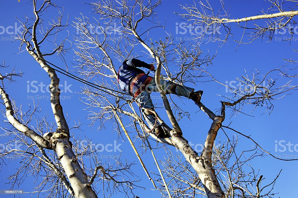 Chainsaw Arborist Tree Surgeon High Cutting Sawdust stock photo