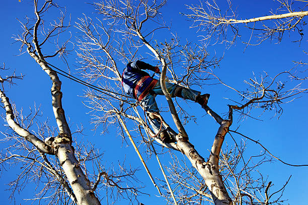 chainsaw arborist tree surgeon high cutting sawdust - tree surgeon stock photos and pictures