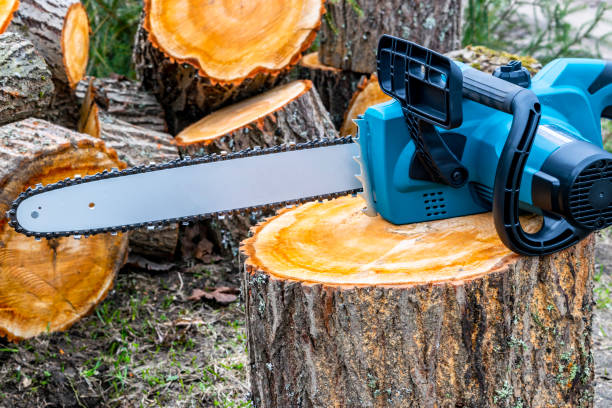 chainsaw. close-up of woodcutter sawing chain saw. close up professional chainsaw blade cutting log of wood. chainsaw bar and cutting chain. blade of a chainsaw in the garden. - tree surgeon stock photos and pictures