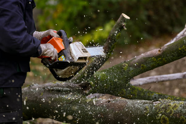 chainsaw in action - chainsaw stock photos and pictures