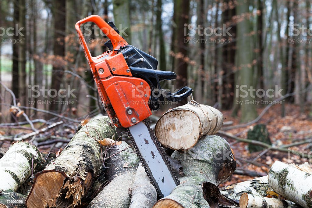 Chainsaw in the forest on a sawed tree trunks stock photo