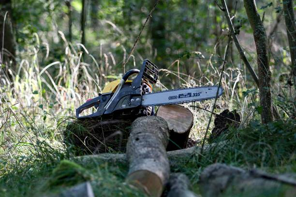 chainsaw in the forest on a stump stock photo