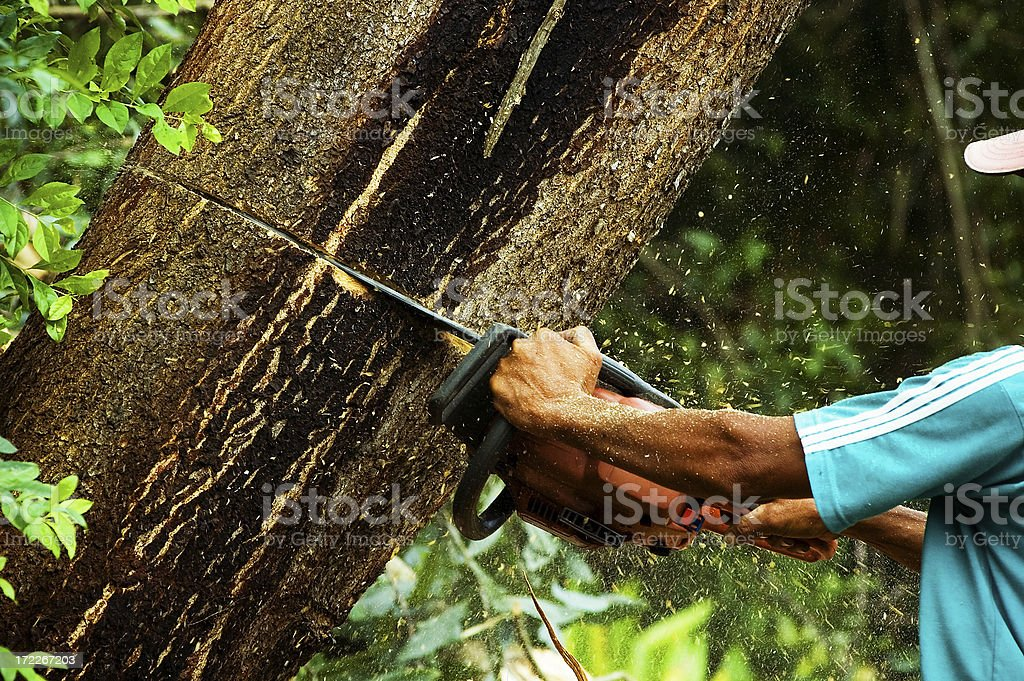 Chainsaw in the rain forest. stock photo