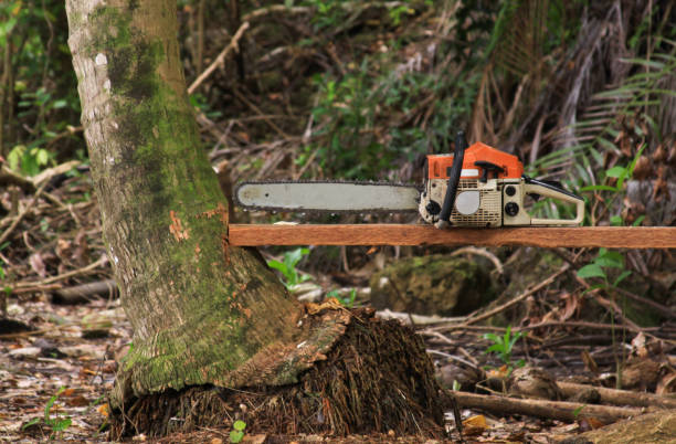 Chainsaw on wood stock photo