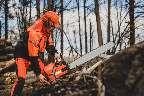 A chainsaw operator. A chainsaw operator is preparing to cut a tree trunk, holding a big orange chainsaw. Protective equipment is used, such as helmet, pants and a vest. forester stock pictures, royalty-free photos & images