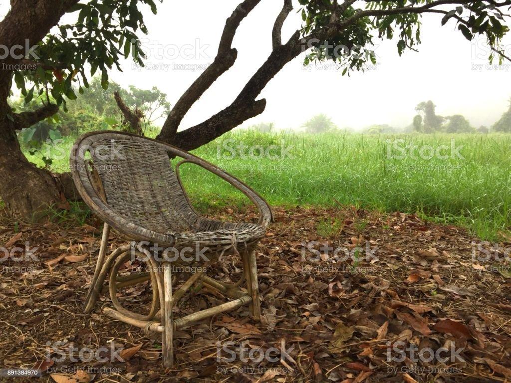 Dem Baum Unter und mehr iStock Baum Bilder Stuhl Stockfoto von CrdoxBe