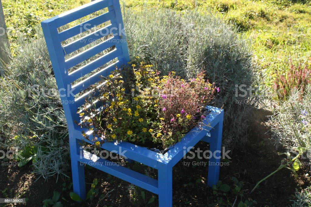 Chair filled with flowers  Flower bed royalty-free stock photo