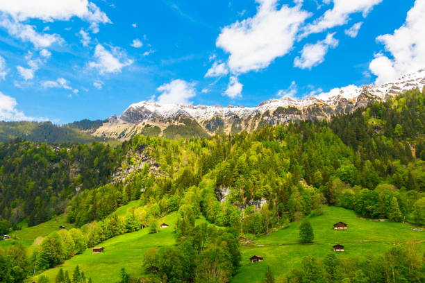 Chalets on green mountain slope. Swiss Alps. Lauterbrunnen, Switzerland, Europe. Chalets on green mountain slope. Swiss Alps. Lauterbrunnen, Switzerland, Europe. swiss alps stock pictures, royalty-free photos & images