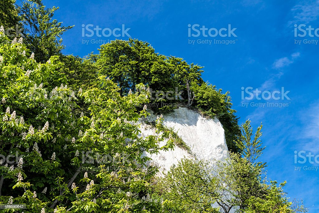 Chalk cliffs on shore of the Baltic Sea stock photo