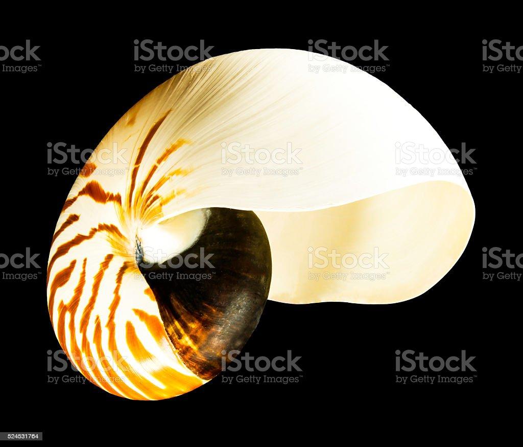Chambered Nautilus Nautilina JccMedia Seashell On Black Background stock photo