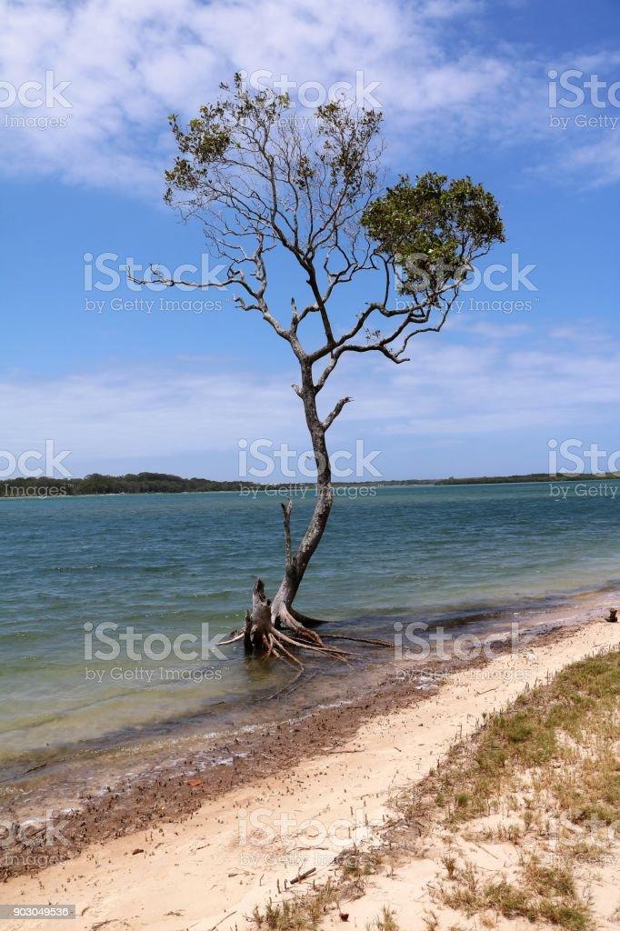 Chambers Island Maroochydore, Sunshine Coast Australia stock photo