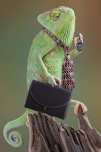 chameleon biznesmen z aktówka i telefon komórkowy - kameleon zdjęcia i obrazy z banku zdjęć