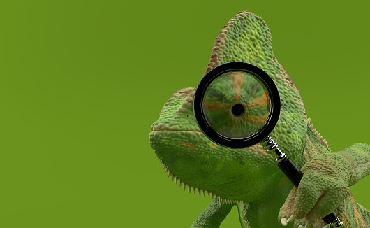 Chameleon is looking through a magnifying glass