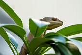 Closeup of a chameleon in a plant