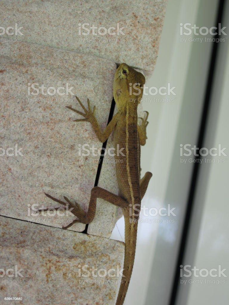 Chameleon. stock photo
