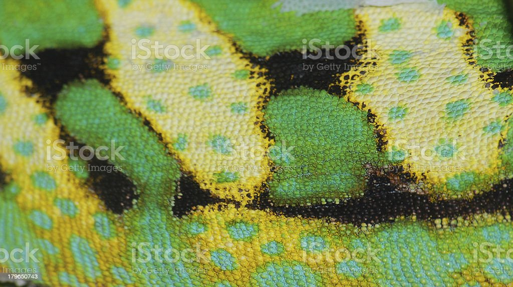 chameleon skin stock photo