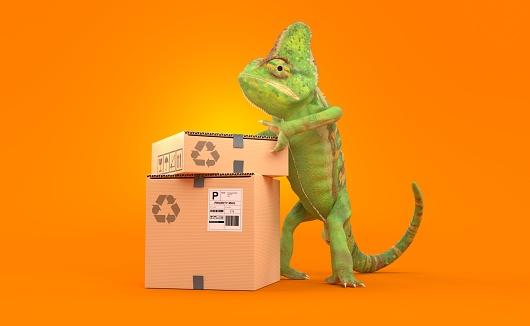 Chameleon with stack of boxes on orange background. 3d illustration