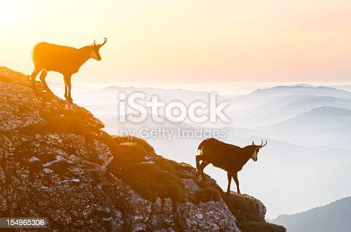 chamoix descending rock cliffs during sunset
