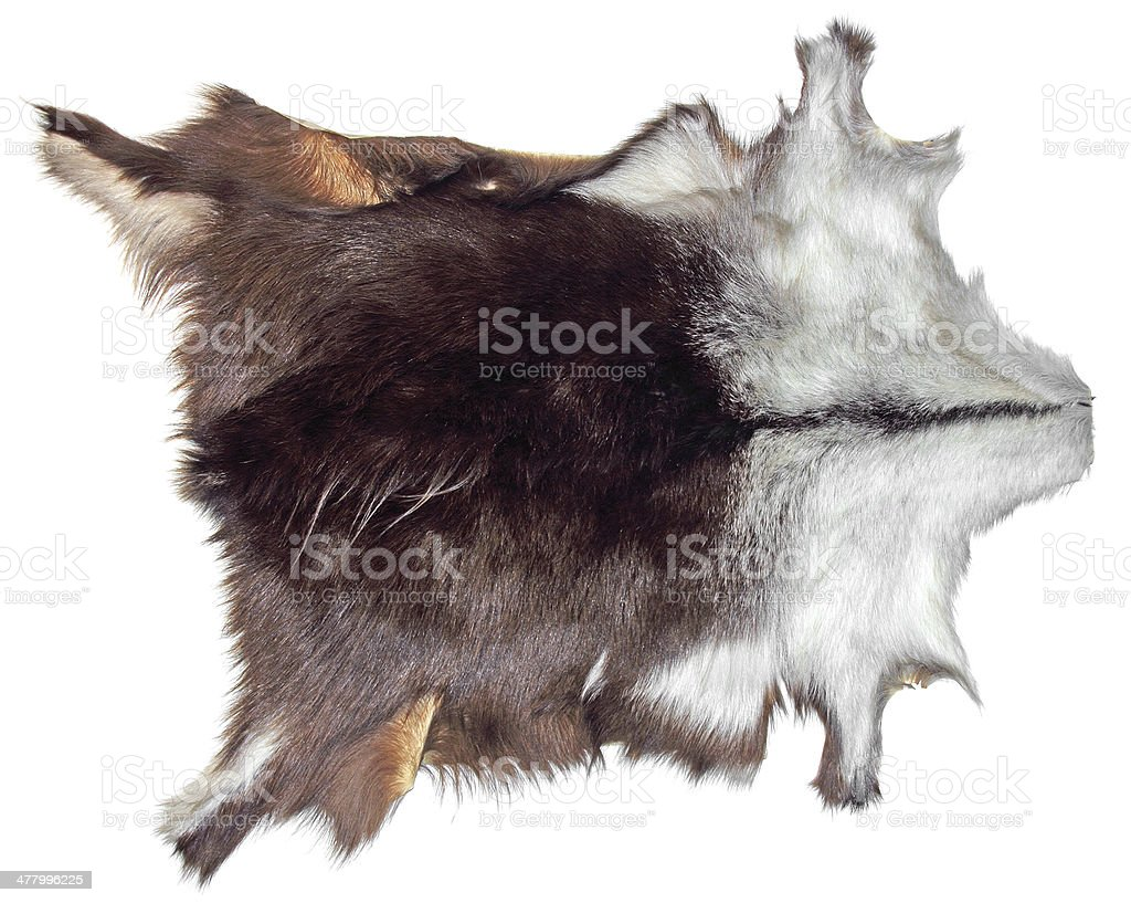 Chamois leather stock photo