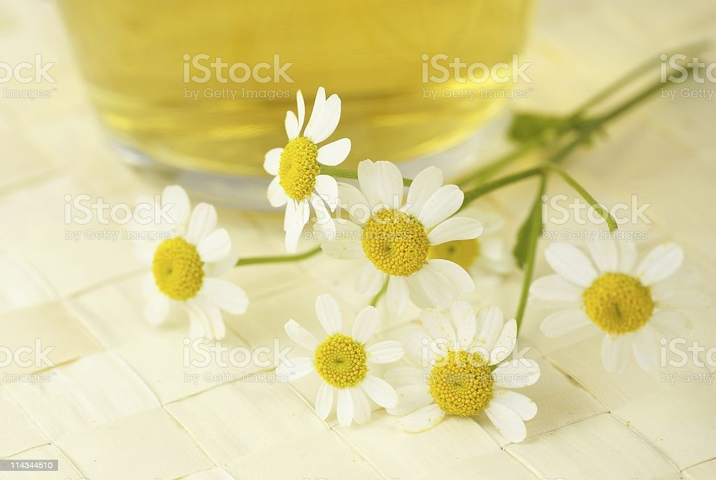 Chamomile and tea royalty-free stock photo