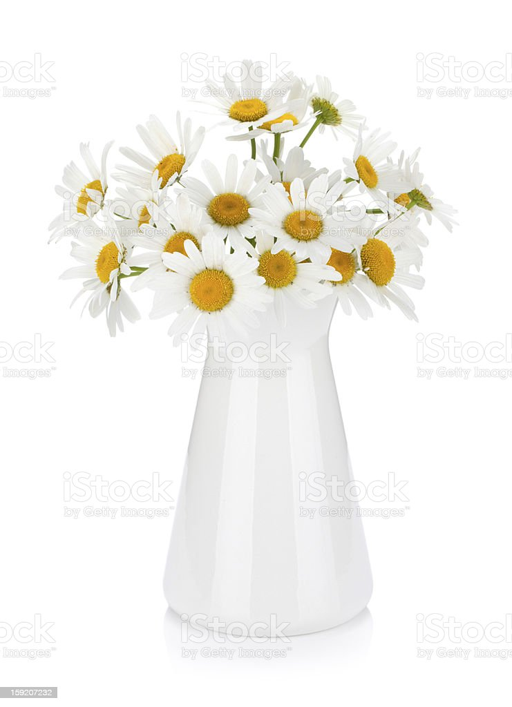 Chamomile bouquet in vase royalty-free stock photo
