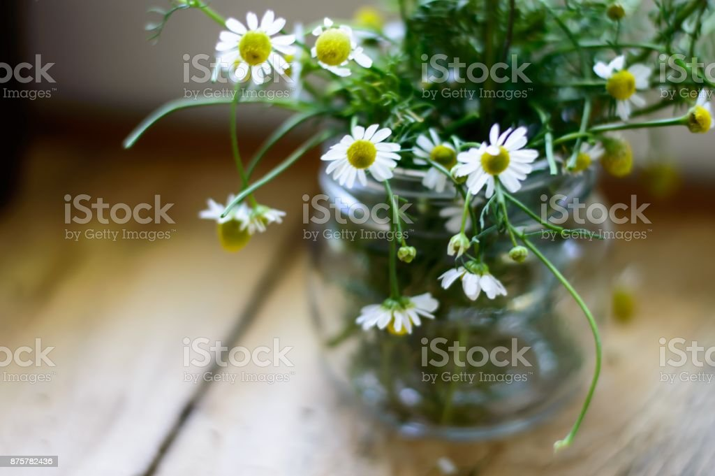 Chamomile daisy flowers in jar on rustic wood table stock photo