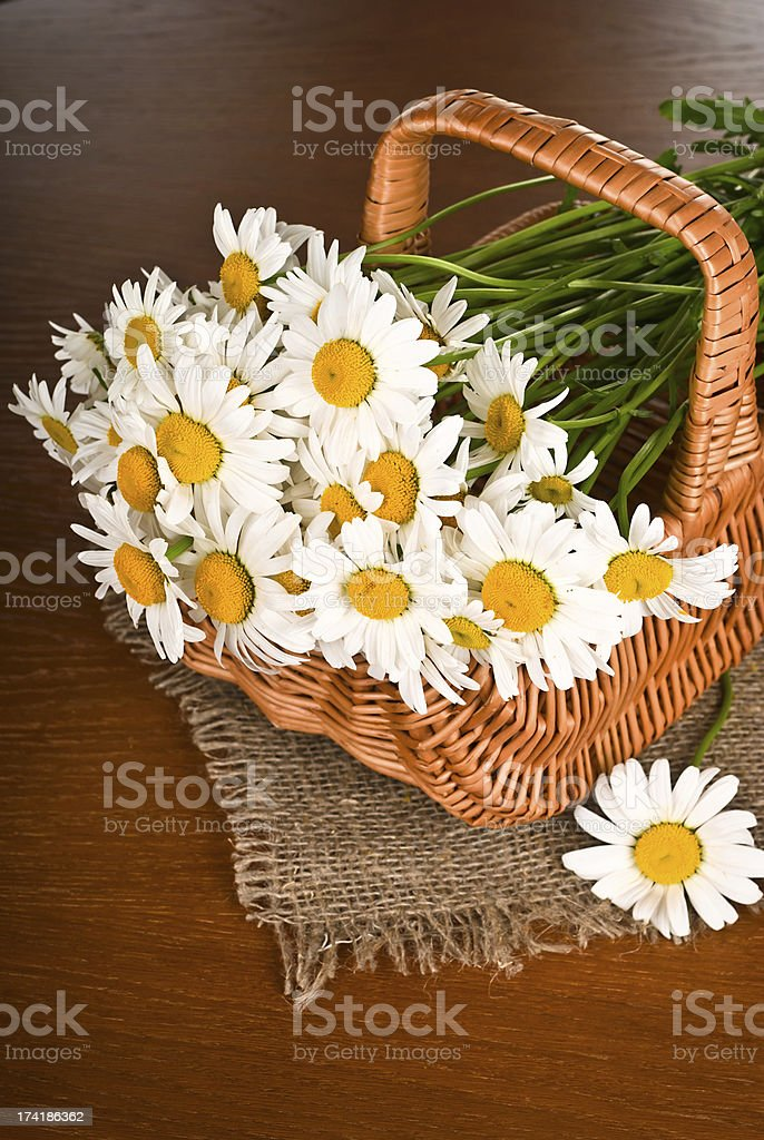 Chamomile flower in basket royalty-free stock photo