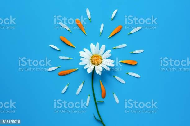 Chamomile flower on blue backdrop picture id813129016?b=1&k=6&m=813129016&s=612x612&h=d juewuiya2kkcqgp60yd xlxvxjkq2bxhp2fdmkkwg=