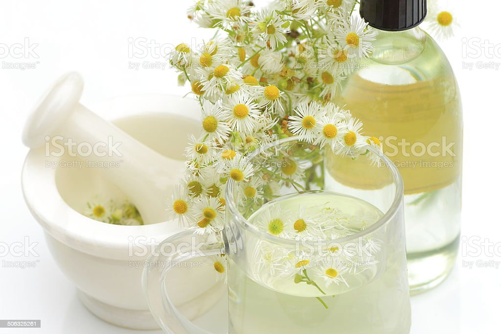 Chamomile flower virtues stock photo