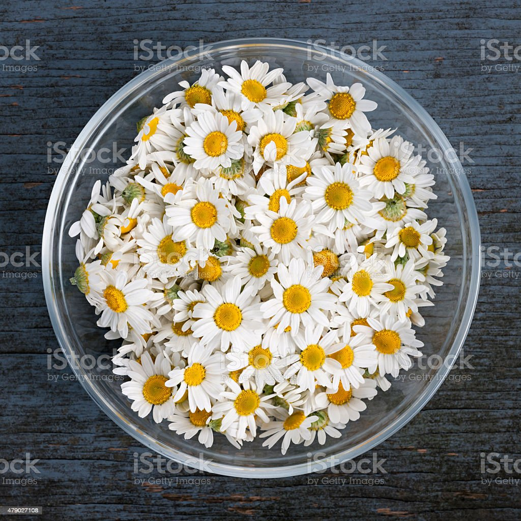 Chamomile flowers in bowl stock photo