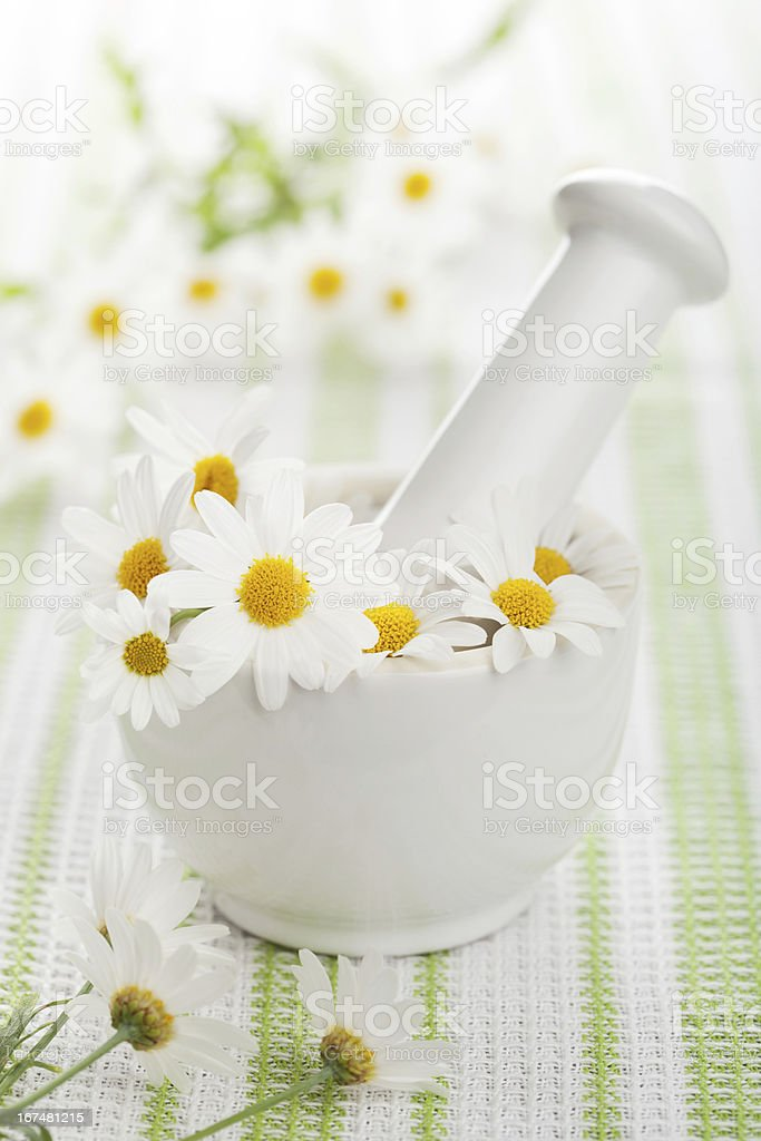chamomile flowers in mortar royalty-free stock photo