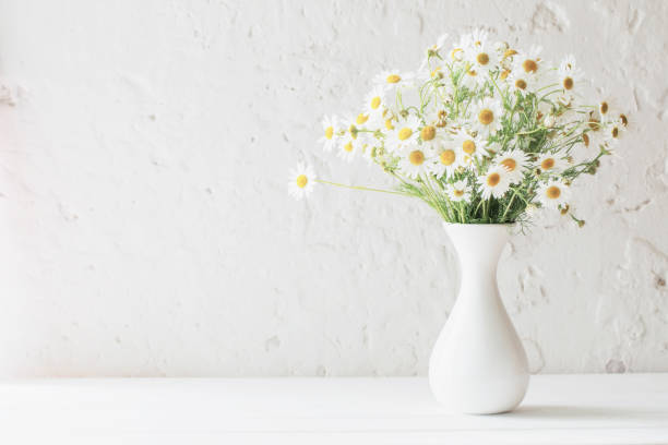 chamomile in vase on white background - vase stock pictures, royalty-free photos & images