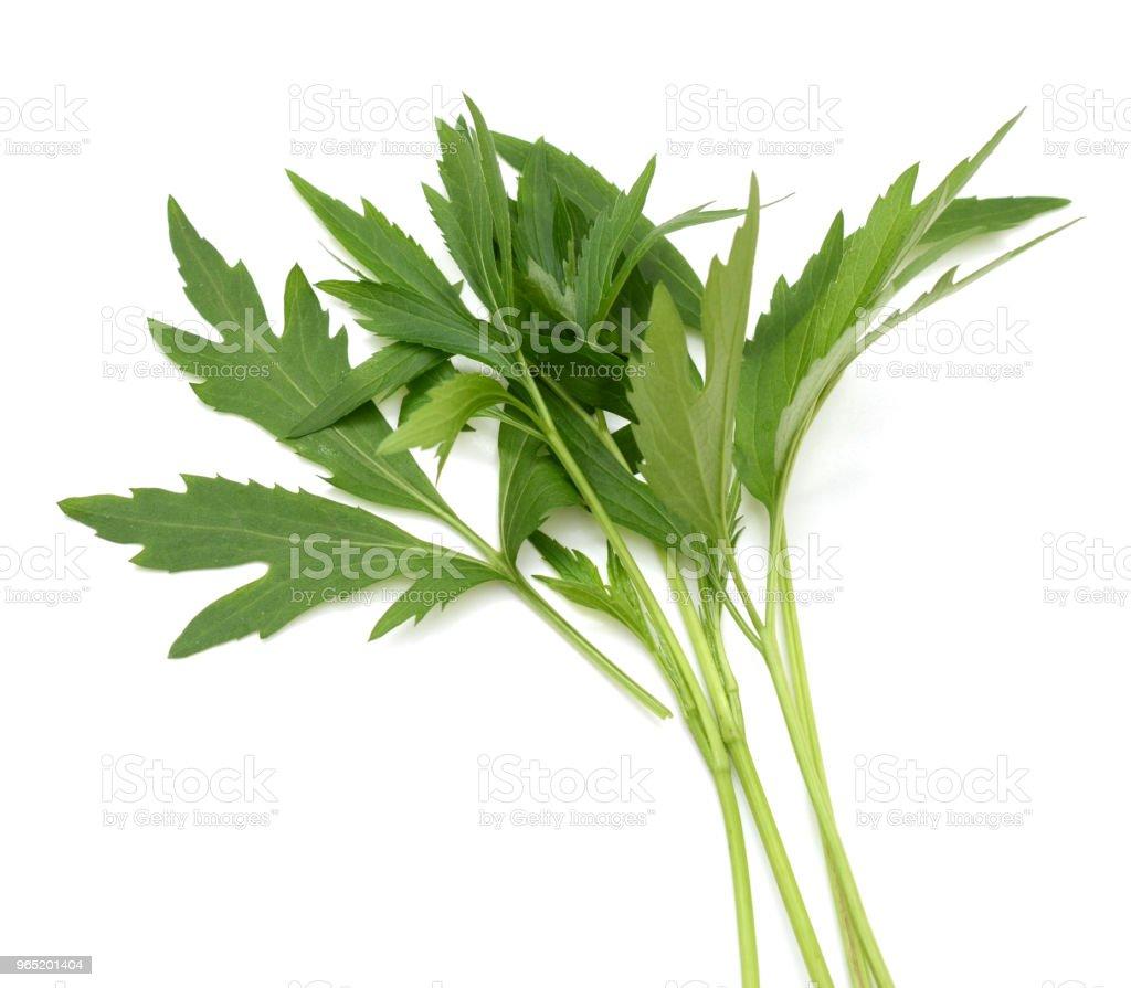 chamomile leaf isolated on a white background zbiór zdjęć royalty-free