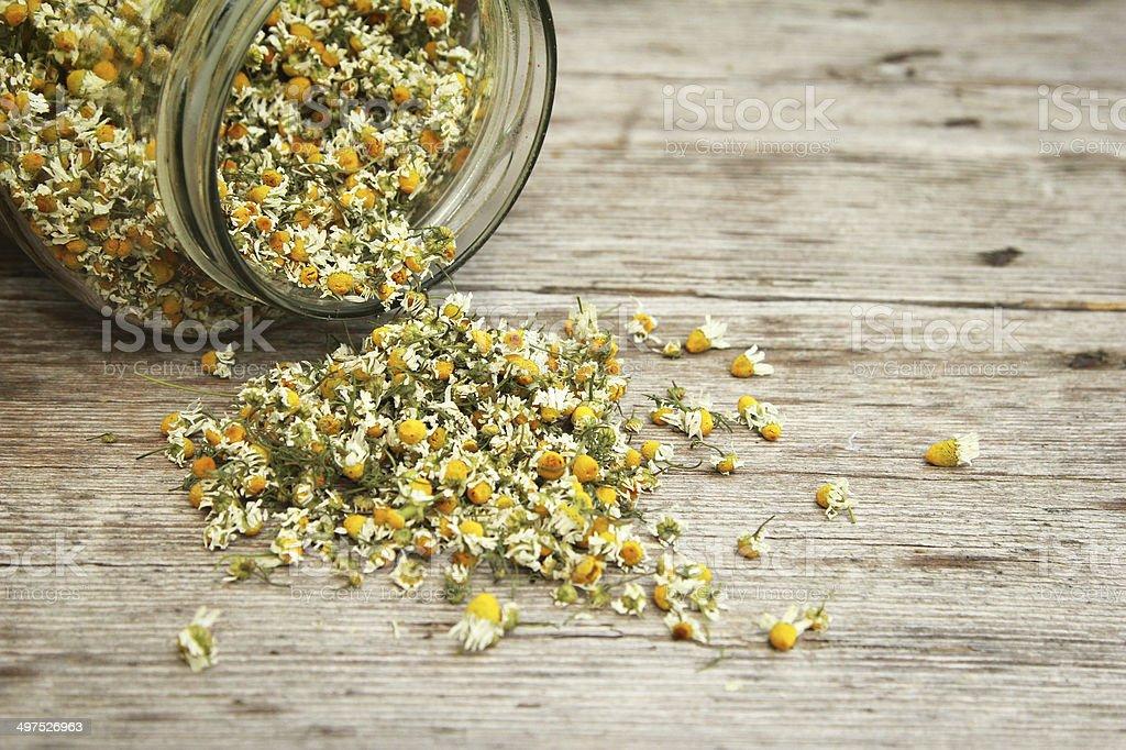 Kamille - Lizenzfrei Aromatherapie Stock-Foto